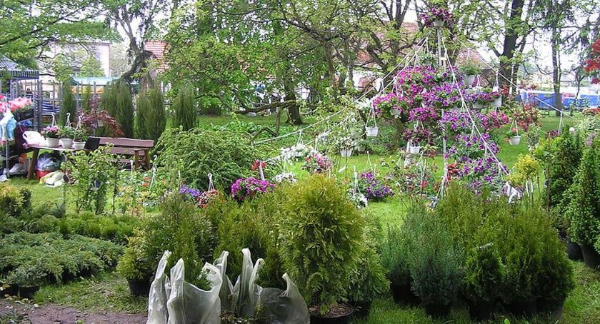 Wystawy, Kwiaty Ogrodów niedzielę Gołotczyźnie - zdjęcie, fotografia