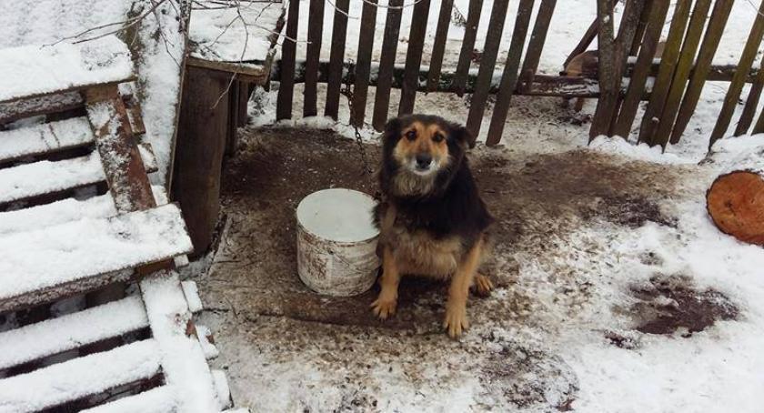 Organizacje Pozarządowe, Akcja sterylizacji suczek wiejskich powiatu ciechanowskiego - zdjęcie, fotografia