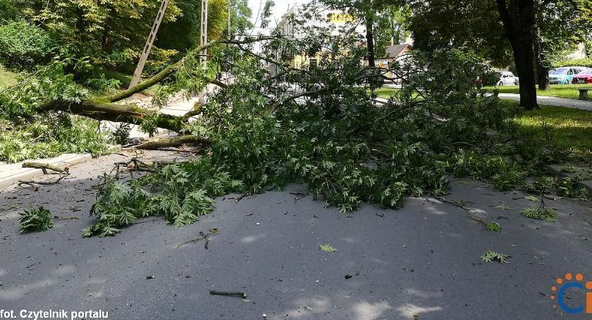 Interwencje, Wasze Drzewo runęło centrum miasta przygniotło rowerzysty [zdjęcia] - zdjęcie, fotografia