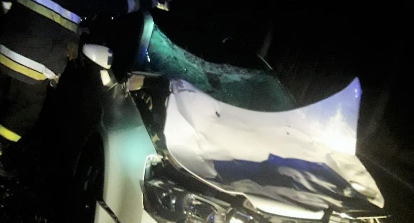 Wypadki drogowe, Kolejne zderzenie samochodu osobowego łosiem [zdjęcia] - zdjęcie, fotografia