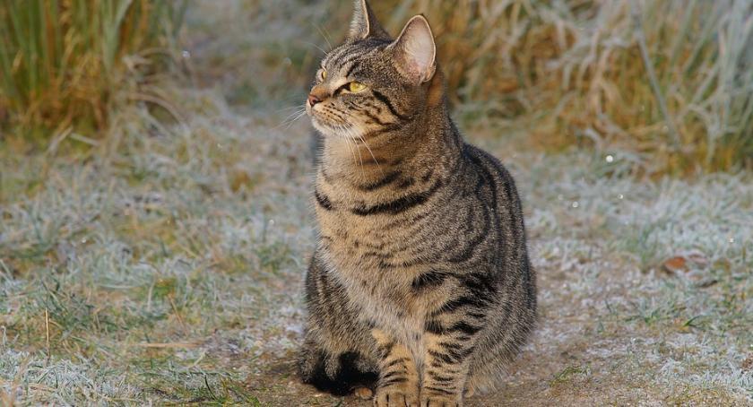 Społeczeństwo, Ciechanowianie mogą zgłaszać karmę bezdomnych kotów - zdjęcie, fotografia