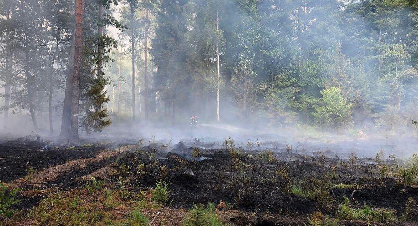 Pożary, Płonął Policja szuka podpalacza - zdjęcie, fotografia