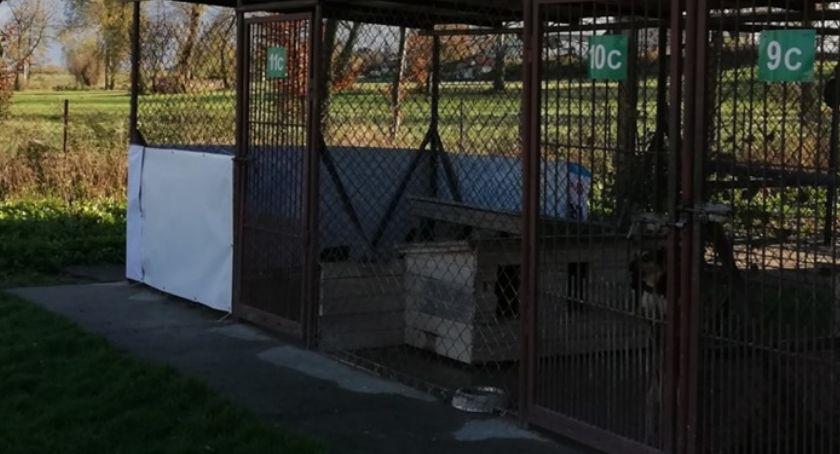 Społeczeństwo, Kandydacie! Przekaż swoje banery wyborcze bezdomnym zwierzętom Pawłowa - zdjęcie, fotografia