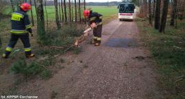 Drzewa na drogach i zalane piwnice w powiecie ciechanowskim