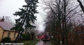 Pochylone drzewo zagrażało kierowcom (zdjęcia)