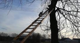 Przez dwa dni siedział na drzewie, bo bał się zejść. Pomogli mu strażacy