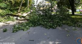 Wasze Info: Drzewo runęło w centrum miasta. Omal nie przygniotło rowerzysty [zdjęcia]