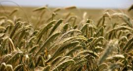 Dramatyczna sytuacja w sadownictwie i rolnictwie na Mazowszu