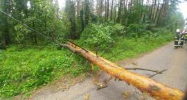 Strażacy z powiatu ciechanowskiego usuwali skutki burzy