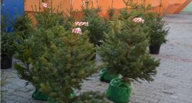 Oddaj odpady, odbierz choinkę - świąteczna akcja w ciechanowskim PUK-u