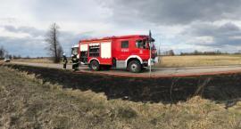Pożar pod Glinojeckiem. Na nic apele strażaków [zdjęcia]