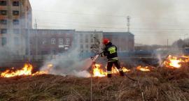 Sześć pożarów w Ciechanowie i okolicznych gminach [zdjęcia]