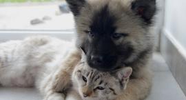 Miasto dofinansuje sterylizację suczek i kotek