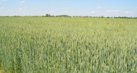 Uwaga! Ratusz przyjmuje już wnioski od rolników
