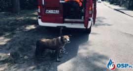 Pies utknął na rzece w Glinojecku [zdjęcia]