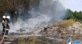 Pod Glinojeckiem płonęły drzewa i nieużytki [zdjęcia]