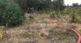Pod Ciechanowem płonął las [zdjęcia]