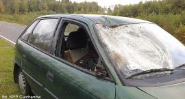 Kolejny wypadek z udziałem łosia: wbiegł wprost pod Astrę (zobacz zdjęcia)