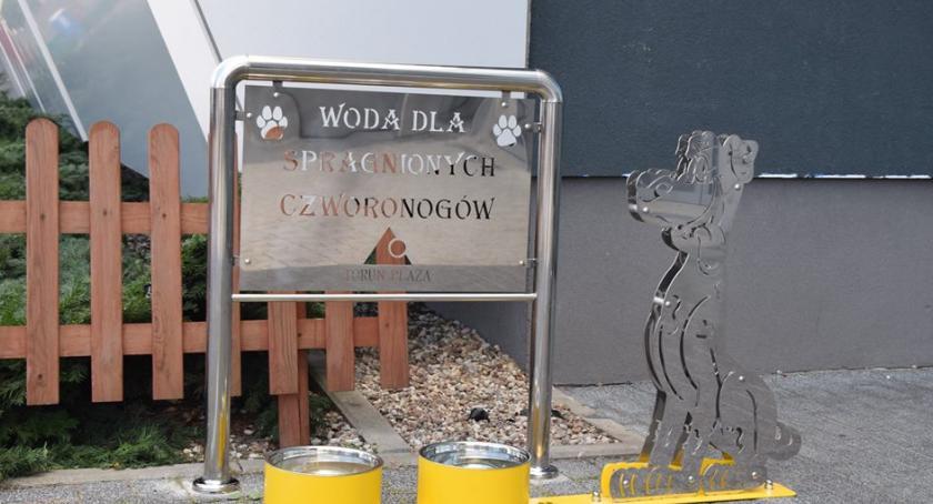 Ciekawostki, czworonogów Toruń Plaza pamięta zwierzętach - zdjęcie, fotografia