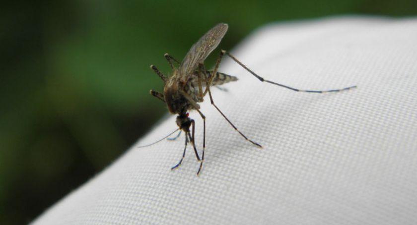 Komunikaty, komarów Toruń miasto zamierza walczyć - zdjęcie, fotografia