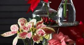 5 pomysłów na świąteczne dekoracje z kwiatami