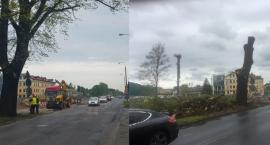 Kolejne dorodne drzewa zostały wycięte. Na Szosie Chełmińskiej zrobiło się łyso! [FOTO]