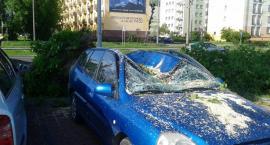 Drzewo zmiażdżyło w Toruniu samochód - zobacz zdjęcia!
