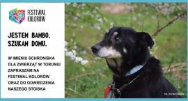 Przygarnij psa! Zobacz Miecia, Gonzo i inne zwierzaki z toruńskiego schroniska [FOTO]