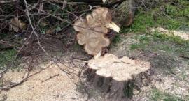 Masowa wycinka drzew! Gdzie tym razem piła poszła w ruch?