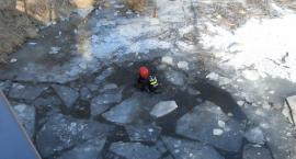 UWAGA! Strażacy szukają dziecka w Martówce na Bydgoskim Przedmieściu [FOTO]
