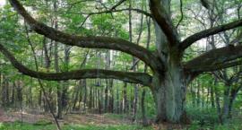 Będzie kolejny park krajobrazowy w naszym regionie!