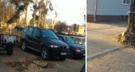 Kolejna wycinka w Toruniu. Dlaczego drzewa poszły pod topór? [FOTO]