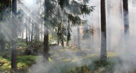 W Toruniu i regionie niepokojąco przybywa pożarów. Znamy przyczyny [ANALIZA]