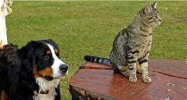 Masz psa lub kota? To wydarzenie jest dla Ciebie!
