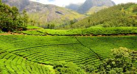 Trwa najlepszy okres na wizytę w Indiach. Dlaczego warto się tam wybrać?