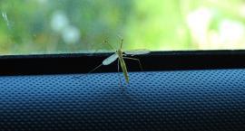 Jak bronić się przed owadami? Odpowiedź na Bulwarze Filadelfijskim!
