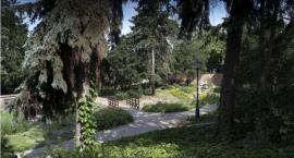 Alpinarium - idealne miejsce do relaksu powstało na toruńskiej starówce!