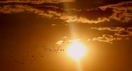 NASA ostrzega: dziś wystąpi burza słoneczna! Co nam grozi?