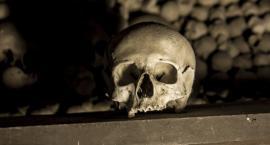 W samym centrum Torunia odnaleziono ludzkie szczątki