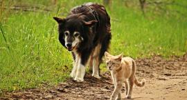 W Toruniu odbędzie się wyjątkowe wydarzenie dla miłośników zwierząt