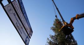 Piękna bożonarodzeniowa choinka stanęła przy Urzędzie Marszałkowskim w Toruniu [FOTO]