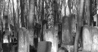Cmentarz żydowski w Warszawie – wystawa fotograficzna