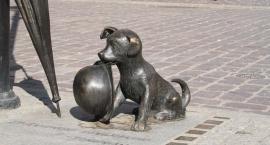 Piesek Filuś z Chełmińskiej