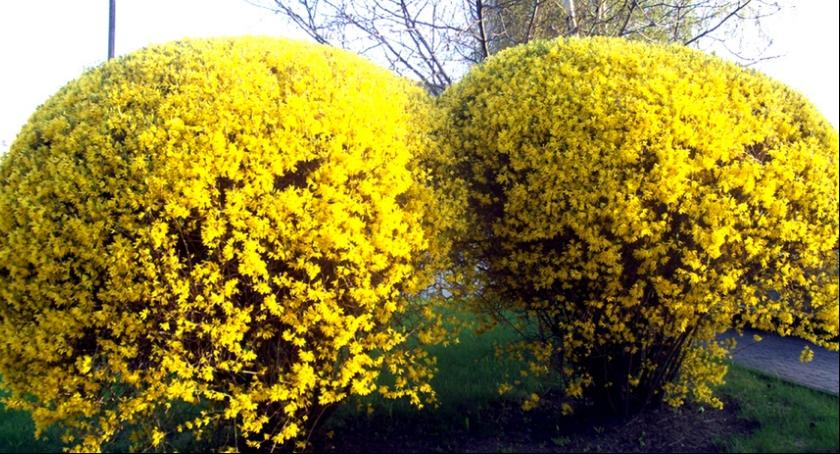 Ciekawostki, Marzec ogrodzie - zdjęcie, fotografia