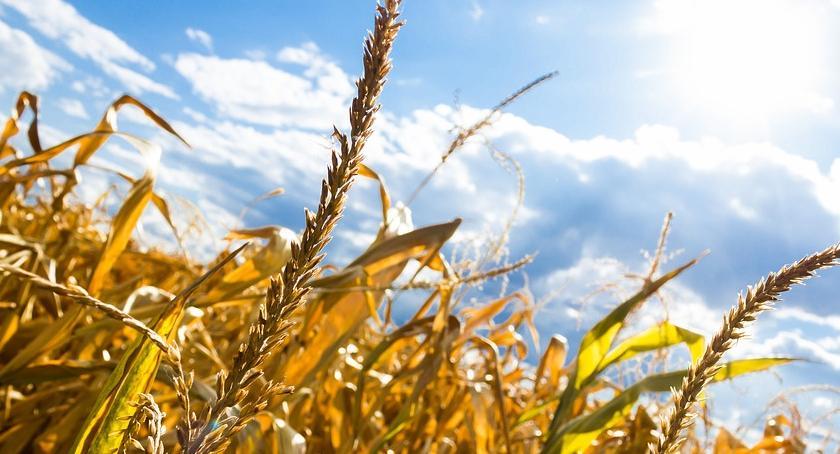 Instytucje rolnicze, warto skarżyć - zdjęcie, fotografia