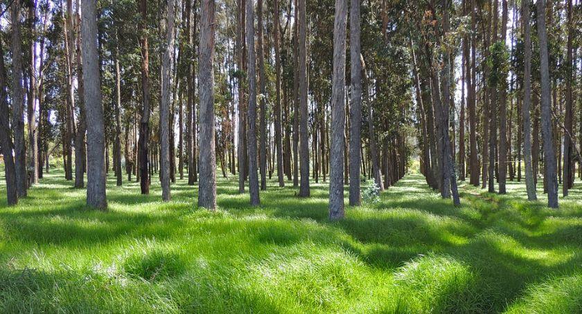 Uprawa, Sadźmy drzewa - zdjęcie, fotografia