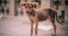 Psy uratowane  w ostatniej chwili