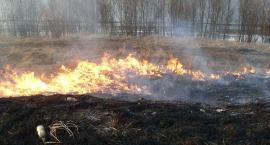 Płoną trawy w powiecie