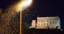 Inwazja jętek w Golubiu-Dobrzyniu