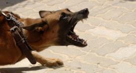 Psi problem na szerszą skalę
